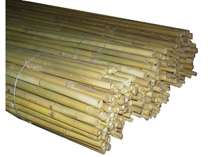 Fedi giovannetti prodotti per vivaismo articoli e for Canne di bamboo da arredo